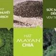 Công dụng và cách sử dụng Hạt Chia (Chia seed, Salba)